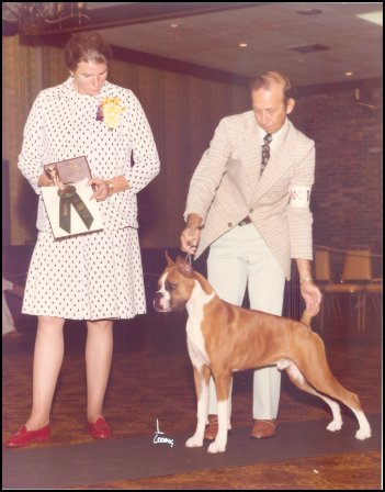 BOS to Best Puppy -- Boomer Boxer Club -- 1977