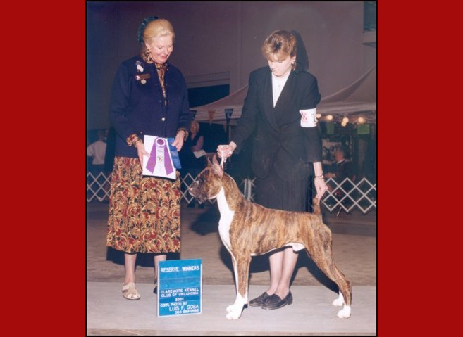 1st Show -- Reserve Winners Dog (4 point major) -- Boxer Club of Oklahoma --03/21/2001