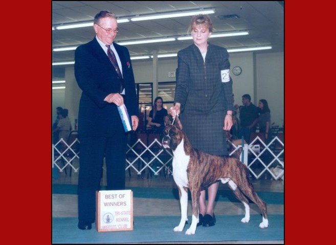 Best of Winners / Winners Dog -- Bartlesville Kennel Club -- 04/28/2001