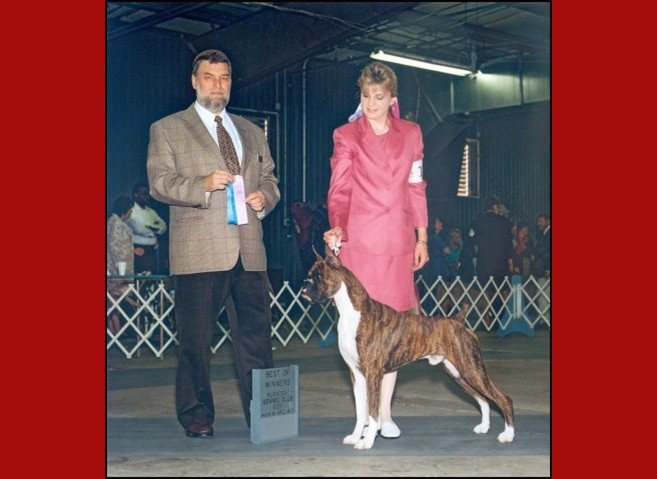 Best of Winners / Winners Dog -- Muskogee Kennel Club -- 05/26/2001
