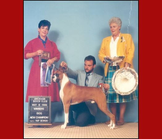1986 American Boxer Club -- Winners Dog - New Champion