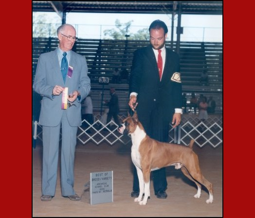 BOB -- Arkansas Kennel Club - 1988