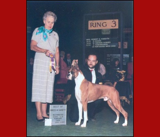 BOB -- Westminster Kennel Club - 1989