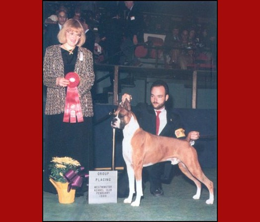 Group 2 -- Westminster Kennel Club - 1989