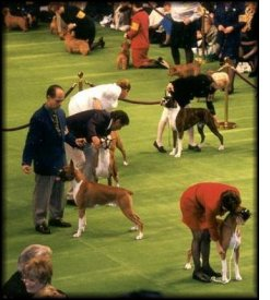 1999 Westminster Kennel Club